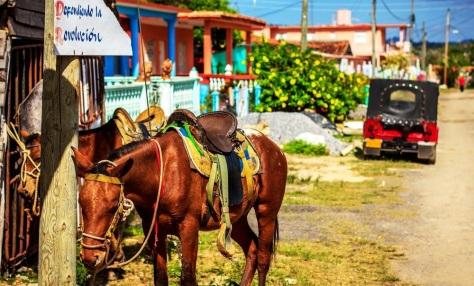 cavalli_a_vinales_pinar_del_rio_cuba